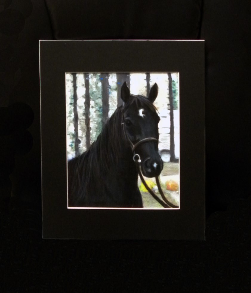Custom Animal Portraits-Horse-Cat-Dog